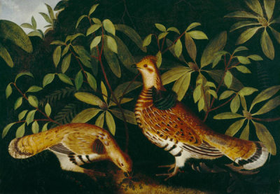 Rubens Peale - Two Ruffed Grouse in Underbrush, 1864